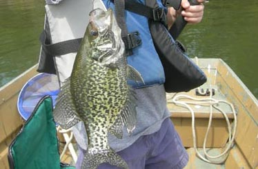 how to read a fishfinder for crappie