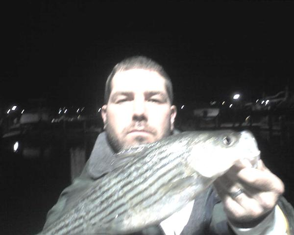 maryland striped bass fishing report