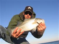maryland jetty rockfish striper striped bass