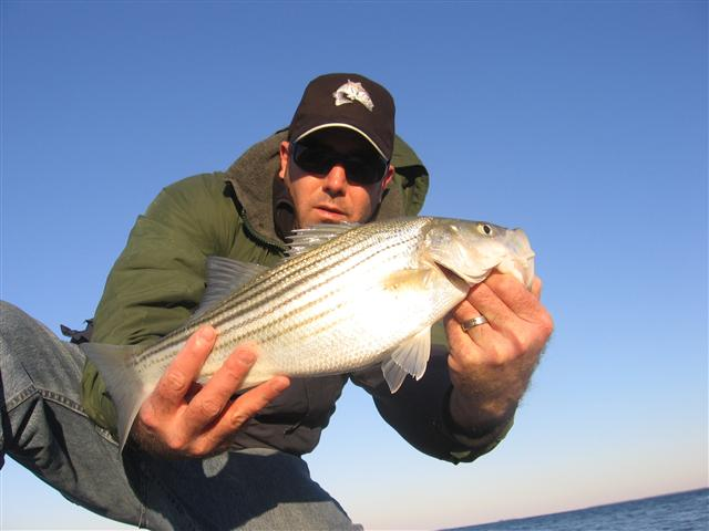 striped bass jetty fishing
