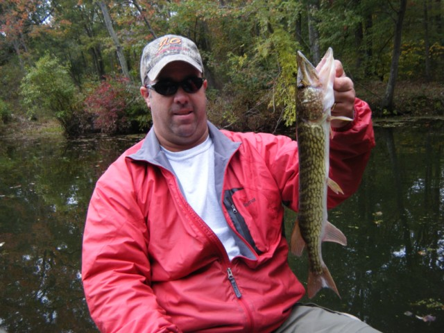 maryland chain pickerel