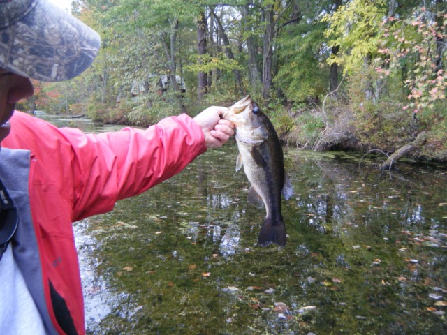maryland fishing report largemouth bass