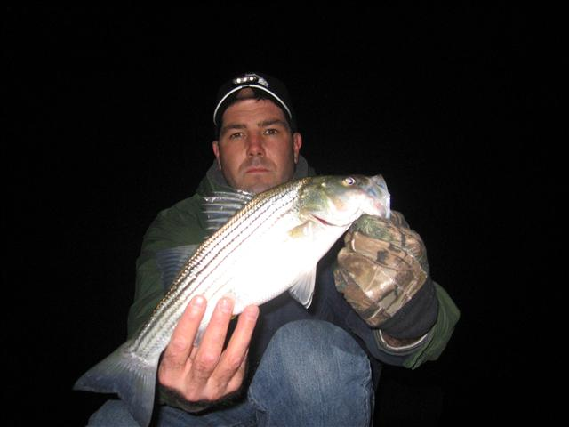 maryland cold weather rockfish