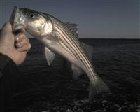 calvert beach jetty fishing report