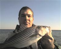 maryland calvert county rockfish striper fishing report