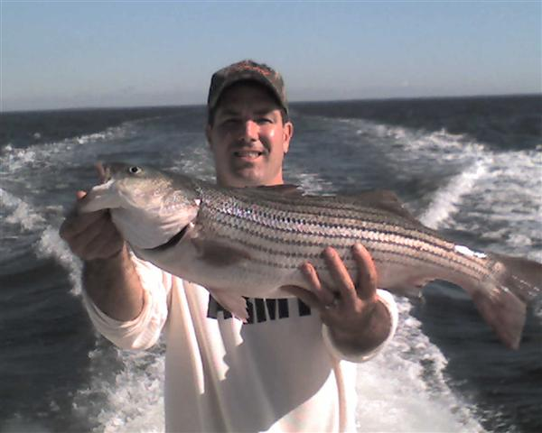 chesapeake bay striper fishing report