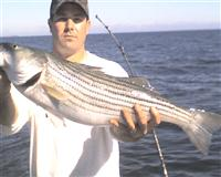 maryland rockfish fishing report