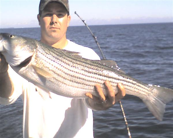 maryland striper fishing report