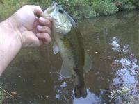 hutchins pond largemouth