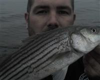 rockfish maryland fishing report photos