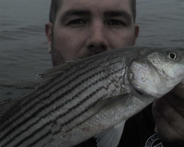 striped bass fishing report photos