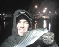 chesapeake bay rockfish