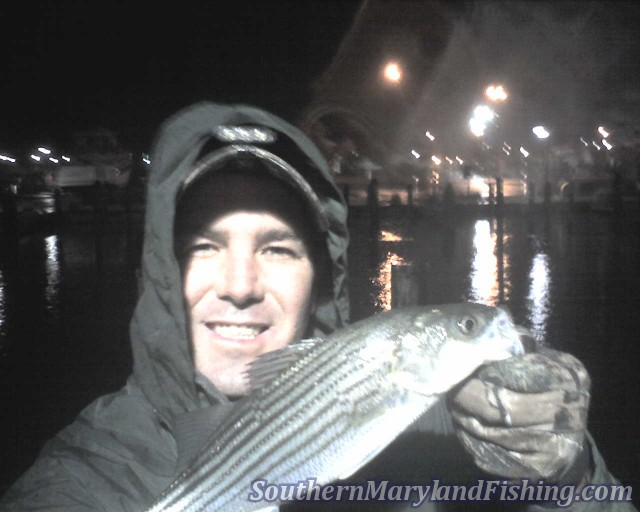 chesapeake bay light tackle striper
