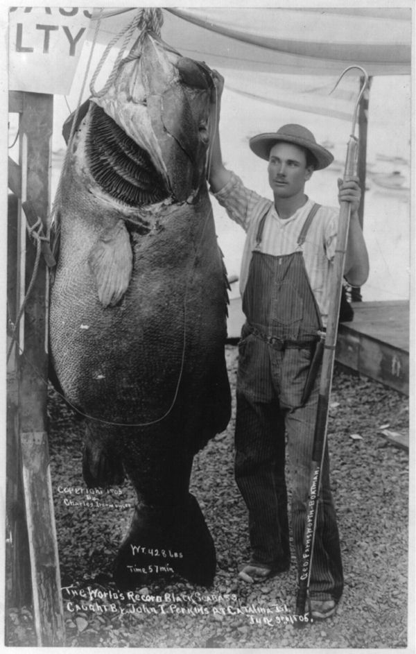 world record black sea bass 1905